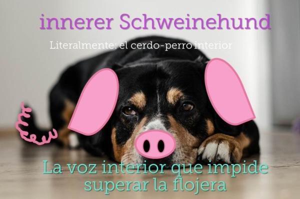 perro cerdo expresiones alemanas