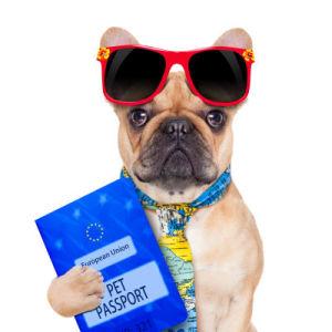 pet pasaporto perros animales