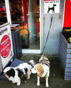 rewe perros alemania