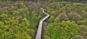 Bosque de Thuringia alemania centro